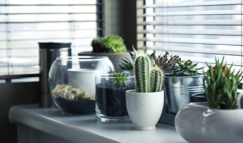 En la imagen se ven varias plantas tipo cactus.